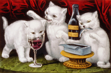 White Cats Drinking Wine