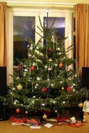 real-christmas-tree-sm240x360