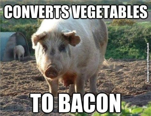 Converts-Vegetables-To-Bacon-Funny-Pig-Humor