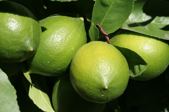 Green lemons are NOT limes